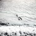Holttest a Duna-parton